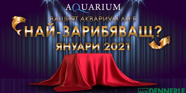 Най-зарибяващ аквариум